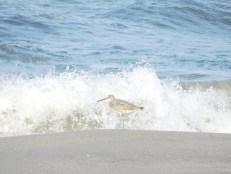 Oiseau à Hobe Sound National Wildlife Refuge / Floride