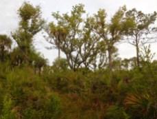 Refuge des Panthères, à Immokalee - Floride