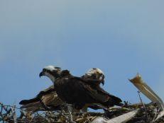 Oiseau sur la plage de Delnor-Wiggins Pass State Park à Naples Floride