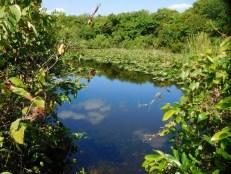 Shark Valley / Parc National des Everglades