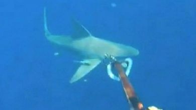 Photo of Floride : Le plongeur ne retrouve plus son bateau… au moment où des requins apparaissent (vidéo)