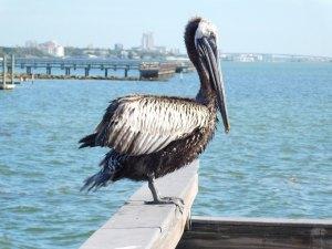 Dunedin, Floride