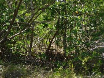 Marais de Crandon Park / Key Biscayne / Miami / Floride