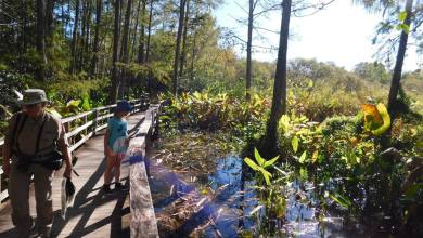 Photo of Visiter le Corkscrew Swamp Sanctuary (Audubon Center) près de Naples en Floride
