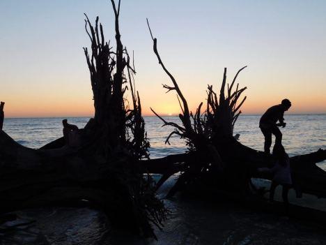 Coucher de soleil sur les squelettes d'arbres sur la plage nord de Longboat Key en Floride