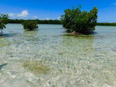 Backcountry des Lower Keys : Marvin Key et Barracuda Keys (Floride)