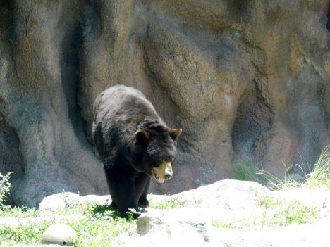 Ours au Zoo de Palm Beach en Floride