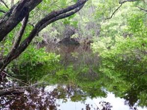 Paysages au Nature Center de la Sanibel-Captiva Conservation Foundation, sur Sanibel Island en Floride