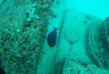Photo of Neptune Memorial Reef : un cimetière sous-marin à Key Biscayne en Floride