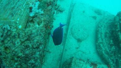 Photo de Neptune Memorial Reef : un cimetière sous-marin à Key Biscayne en Floride