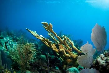 Plongée sous-marine Cuba