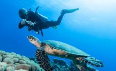 Bahamas Berry Islands - Plongée