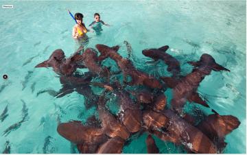 Exumas - Requins