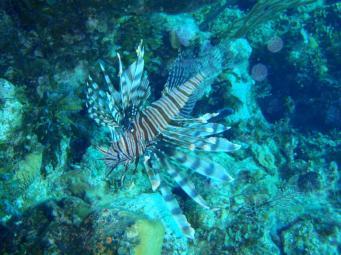 Bahamas Exumas - Faune sous-mairne