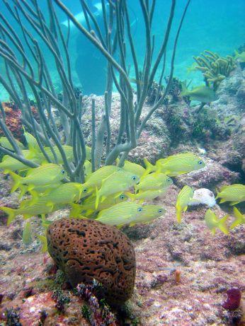 Bahamas Biminis fonds marins