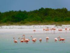 Punta Mosquito, su l'île La Isla Holbox