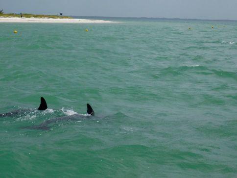 Dauphins à Punta Cocos sur île de Holbox.