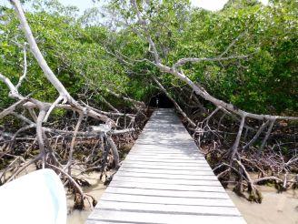 La cenote Yalahau, près de l'île de Holbox.