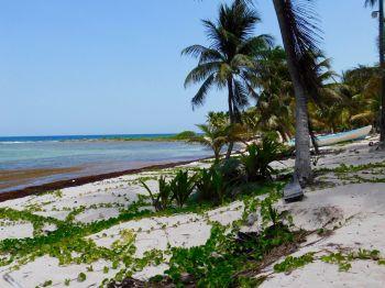 La plage de Paamul, à Playa del Carmen au Mexique