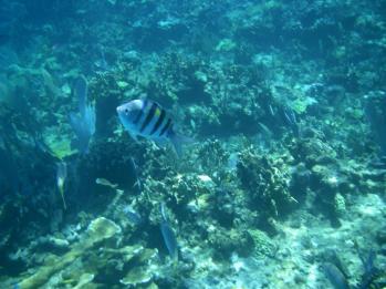 Bahamas Abacos fonds marins