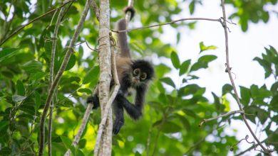 Photo de Parc de Punta Laguna : une immersion dans la nature près de Cobà (à la frontière du Q-Roo et du Yucatan)