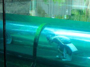 Tunnels de verre au Zoo de Miami