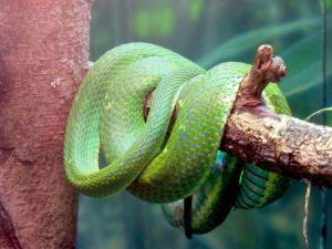 Serpent d'Amazonie au Zoo de Miami