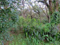El parque Tree Tops en Davie, Florida
