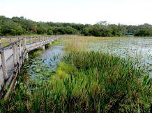 El parque de las copas de los árboles en Davie, en Florida