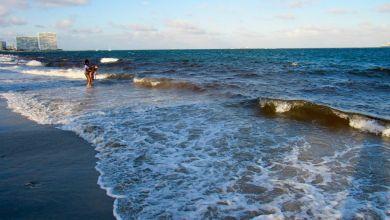 Photo de La marée rouge est toujours fortement présente sur la côte ouest de la Floride