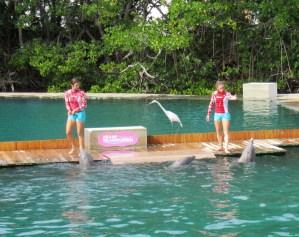 """Le spectacle de dauphins """"Flipper"""" au Miami Seaquarium"""