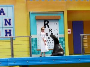 Les phoques à SeaWorld Orlando