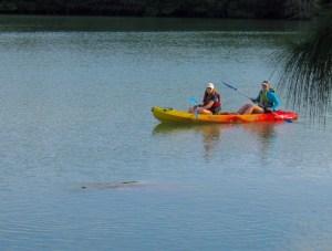 Lamantin au lagon de Virginia Key, à Miami
