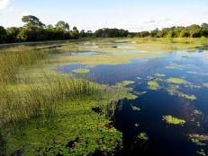 Winding Waters Natural Area à Riviera Beach (près de West Palm Beach en Floride)