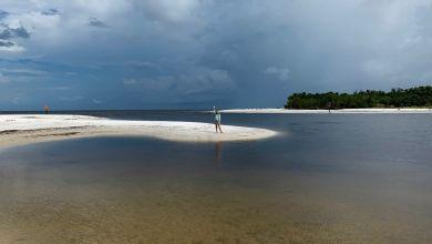 Photo of Floride : Pas d'algues rouges cet été mais ça… rgasse !