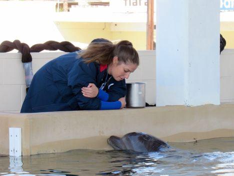 Dauphin au Clearwater Marine Aquarium