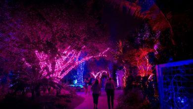 Photo of Les grandioses illuminations de Noël des Jardins Botaniques de Naples (Floride)