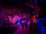 Les grandioses illuminations de Noël des Jardins Botaniques de Naples (Floride)