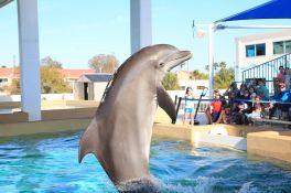 Nicholas le dauphin au Clearwater Marine Aquarium)
