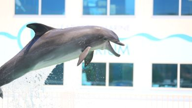 Photo of Clearwater Marine Aquarium : venez visiter Winter le dauphin !