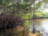 Weedon Island et ses magnifiques tunnels de mangrove à St Petersburg en Floride