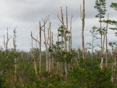 Apoxee Trail, et Owahee Trail : des sentiers de randonnée et de VTT à West Palm Beach en Floride