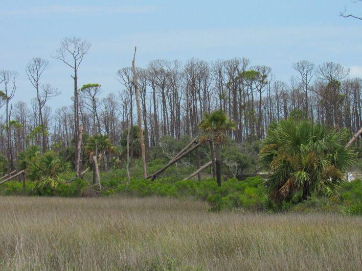 L'ouragan Michael a ravagé d'importantes parties du State Park