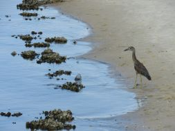 bald-point-state-park-st-mark-national-park-plage-panhandle-Floride-5077