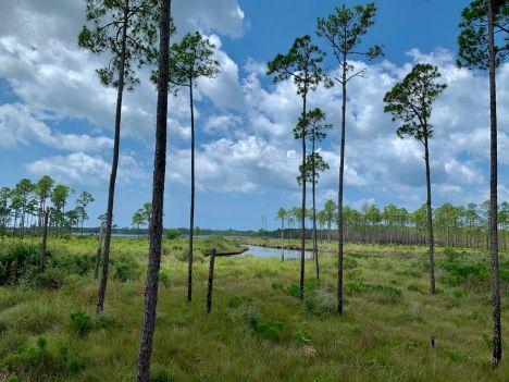 bald-point-state-park-st-mark-national-park-plage-panhandle-Floride-8403