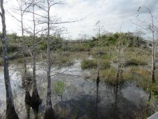 Pa-Hay-Okee (Everglades national Park)