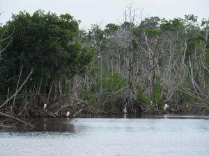 Photo à Mzarek Pond, dans les Everglades