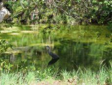 L'ex-zoo de Miami, au sud de Crandon Park sur Key BiscayneL'ex-zoo de Miami, au sud de Crandon Park sur Key Biscayne