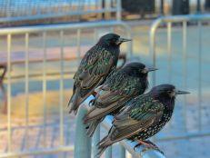 Quiétude en trio à Battery Park, New-York City