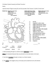 Label The Heart Diagram Worksheet Answers : label, heart, diagram, worksheet, answers, Oxygen, Important, Blood, Cells, Helps, Course
